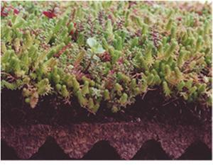 groendaken Flordepot